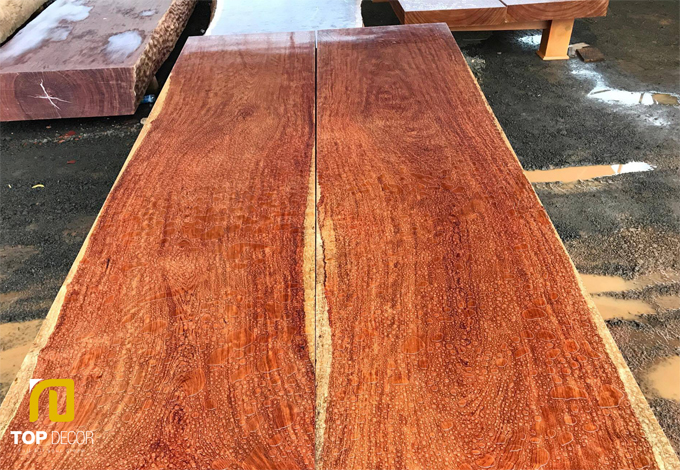 Tìm hiểu về cây gỗ Cẩm và các loại gỗ Cẩm